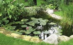Projekt i budowa oczka wodnego. Zobacz, jak zrobić w ogrodzie oczko wodne i jakie rośliny posadzić