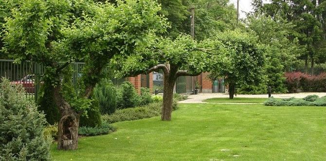 Czy można zrywać owoce z drzewa sąsiada? Co z usuwaniem gałęzi i korzeni drzew w granicy działki?