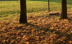 Ognisko w ogrodzie: kiedy palenie liści w ogródku jest nielegalne i co robić z suchymi liśćmi?