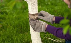 Okrywanie roślin na zimę [PRZYGOTOWANIE OGRODU DO ZIMY]