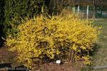 Cięcie krzewów ogrodowych o ozdobnych kwiatach i liściach