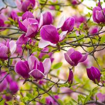 Krzewy ozdobne w ogrodzie