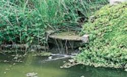 Glony w oczku wodnym: jak zapobiegać i zwalczać
