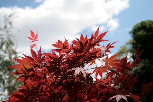 Rośliny o barwnych liściach