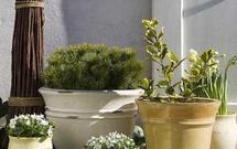 Jak leczyć rośliny tarasowe?